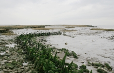 1623_seawall_remains_canvey_island