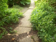Pathway to Hawthorn