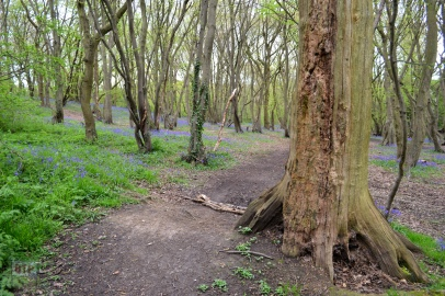Thundersley Glen (21)